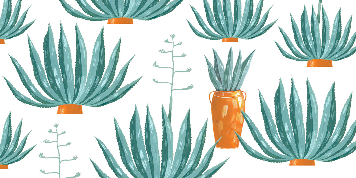 Illustration with agaves